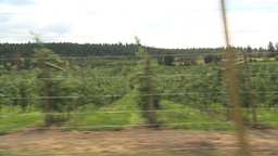 HD2009-6-22-47 fruit orchard drive Stock Video Footage