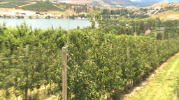 HD2009-6-22-51 fruit orchard Z Stock Video Footage