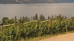HD2009-6-26-2 vineyards Stock Video Footage