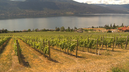 HD2009-6-26-8 vineyards Z Stock Video Footage