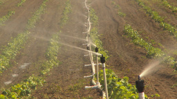 HD2009-6-26-13 strawberry field irrigation TL Footage