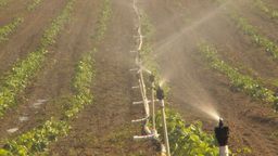 HD2009-6-26-13 strawberry field irrigation TL Stock Video Footage
