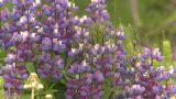 HD2009-6-27-3 Dew Covered Flowers Z stock footage