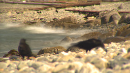HD2009-6-31-20 beach and surf LLL TL Stock Video Footage