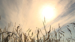 HD2009-6-32-43 windy grass and sun Stock Video Footage