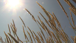 HD2009-6-33-13 wild grass in sun Stock Video Footage