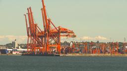 HD2009-6-34-8 sea conatinor cranes Stock Video Footage