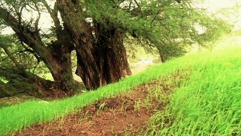 Wind blowing on green meadow Footage