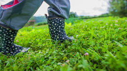 Cute Little Boots Walking Next To Garden stock footage