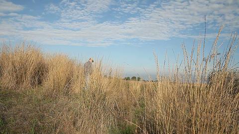 walking away in dry grasses Footage