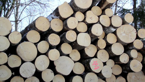 Freshly cut logs neatly piled Footage