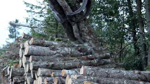 Taking piles of trees and carrying it off lifting  Footage
