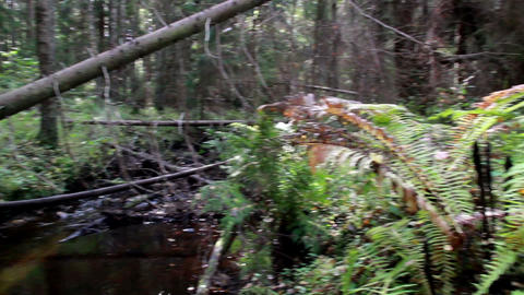 Stream flowing on forest Footage