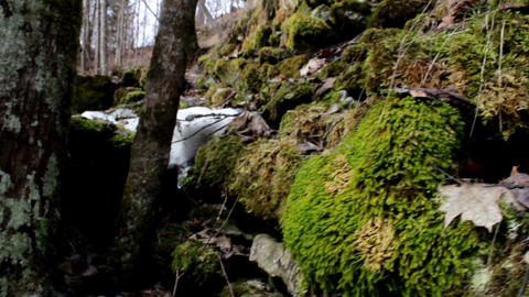 Big Tree Stone Covered In Moss And Snow At The Sam stock footage