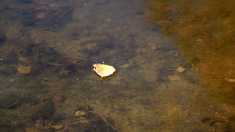 Leaf floating in the water Footage