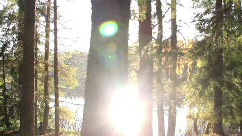 Sun rays getting inside the forest despite the tal Footage