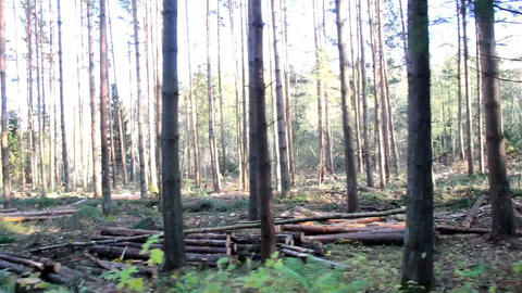 Moving swiftly as you pass by countless trees Footage
