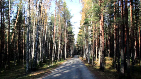 Passing the forrest full of trees Footage