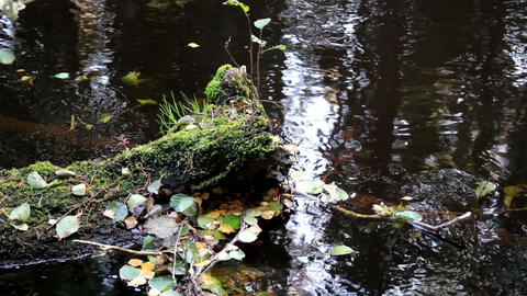 Leaves floating in the water Footage