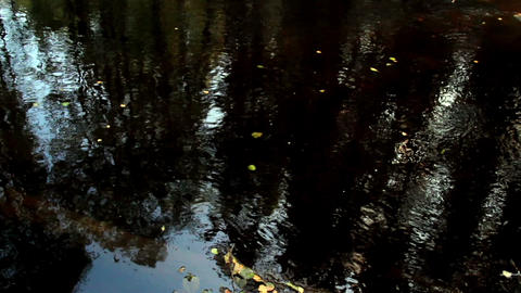 Tiny Leaves Floating On Water stock footage
