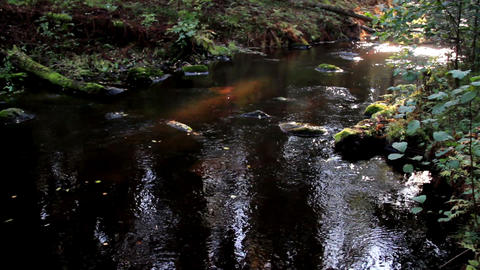 Flowing stream and a bit of sunlight Footage