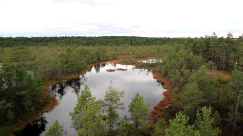 Overhead View Of The Bog Swamp Marsh Land stock footage
