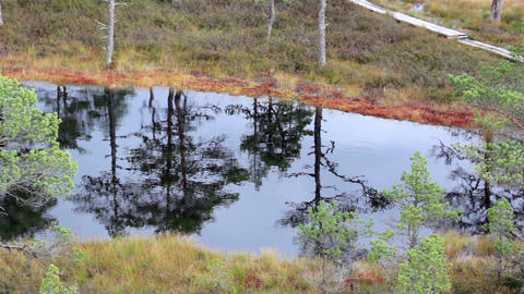 Water reflection of the trees found on the bog swa Footage