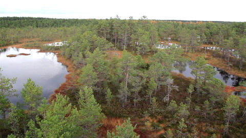 Overhead View Of The Large Bog Swamp Marsh Land Wi stock footage