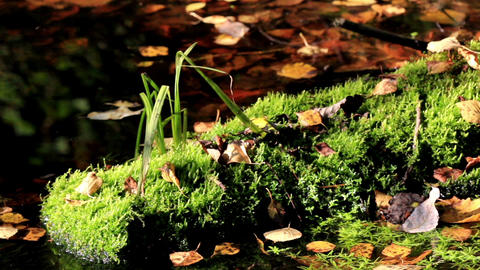Fallen leaves on the ground and a water on the bac Footage