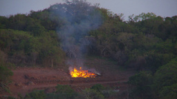 HD2009-11-4-2 slash burn and forest Stock Video Footage