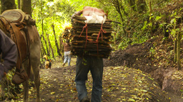HD2009-11-8-20 guatemala man carries firewood on head Stock Video Footage