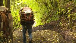HD2009-11-8-20 guatemala man carries firewood on head Stock Video Footage