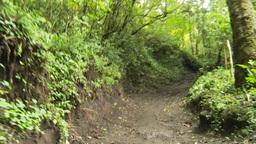 HD2009-11-8-22 guatemala hike trail woman firewood Stock Video Footage