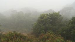 HD2009-11-11-1 rainforest pan Stock Video Footage