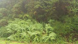 HD2009-11-11-3 rainforest 2 shot Stock Video Footage