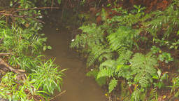 HD2009-11-11-9 mist falling on rainforest floor Footage