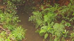 HD2009-11-11-9 mist falling on rainforest floor Stock Video Footage