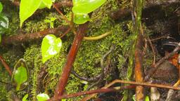 HD2009-11-11-11 mist falling on rainforest floor Stock Video Footage