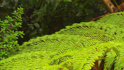 HD2009-11-11-13 ferns Stock Video Footage