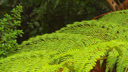 HD2009-11-11-13 ferns Footage