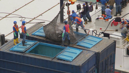 HD2009-11-12-5 unloading tuna Stock Video Footage