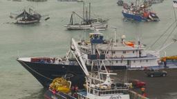 HD2009-11-12-15 tuna fleet at dock Footage