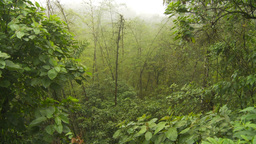 HD2009-11-12-19 jungle in mist Stock Video Footage