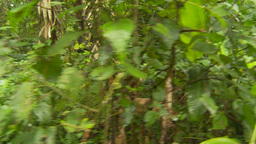 HD2009-11-12-21 walking through jungle Footage