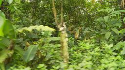 HD2009-11-12-21 walking through jungle Stock Video Footage