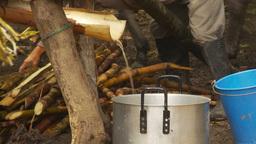 HD2009-11-12-31 sugar cane press Footage