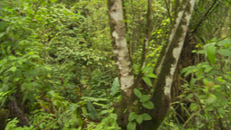 HD2009-11-12-39 jungle Stock Video Footage