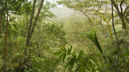 HD2009-11-12-43 jungle Stock Video Footage
