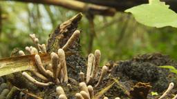 HD2009-11-12-47 jungle mushroom surreal cu Footage