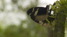 HD2009-11-12-49 butterflies jungle Stock Video Footage